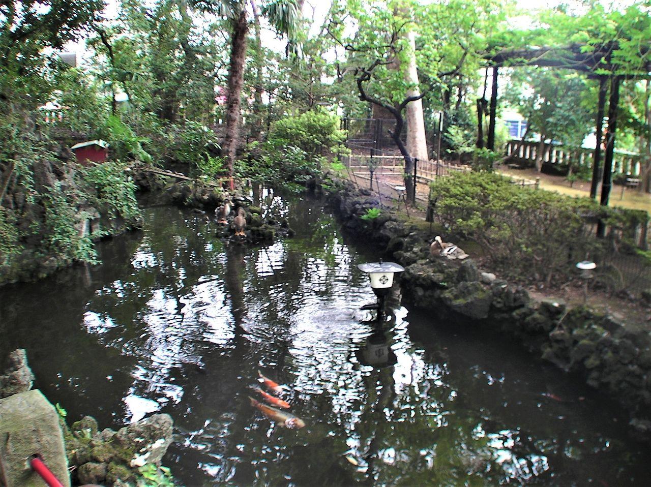 厳島神社前にある池